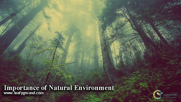 Importance of Natural Environment