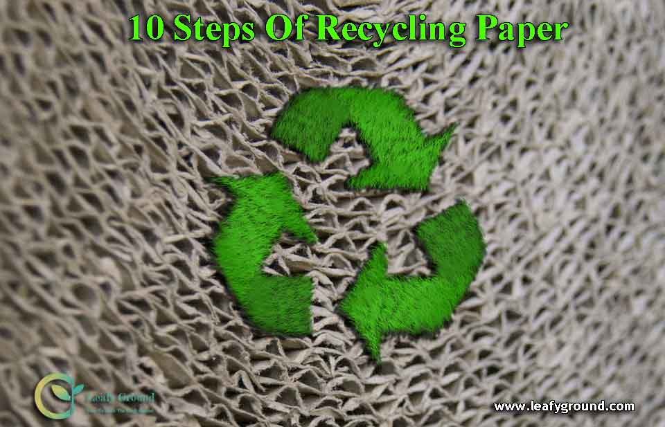 10 steps of recycling paper