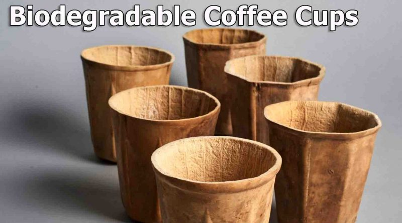 biodegradable coffee cups