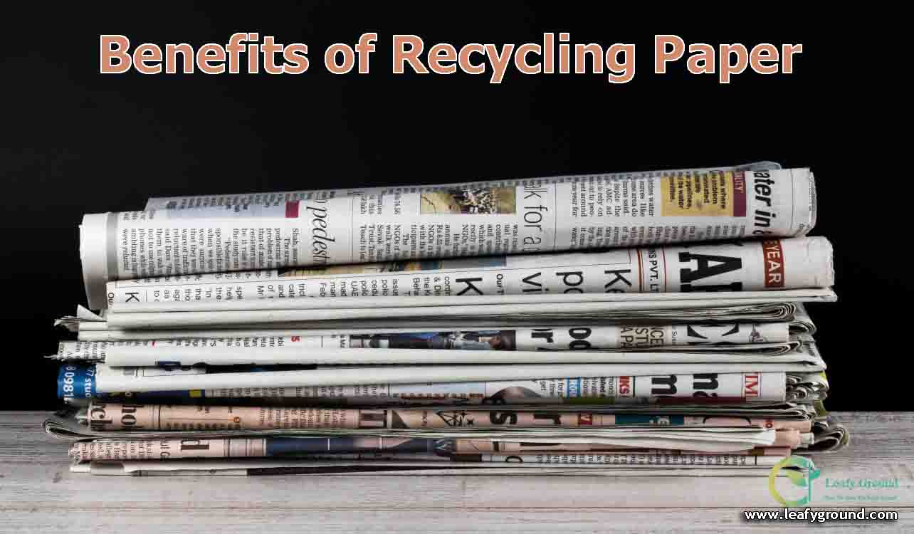 Benefits of recycling paper